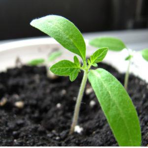 Growth - transformational Leadership